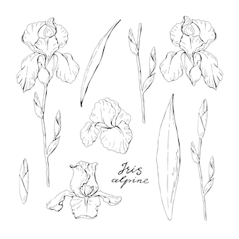 Set of clipart black and white iris
