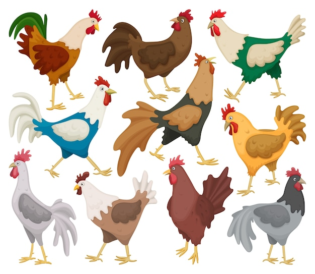 Set of cock of animal isolated on white