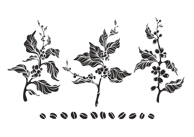 Set of coffee tree branch leaves shape of bean