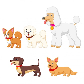 Set collection of different kind of dogs