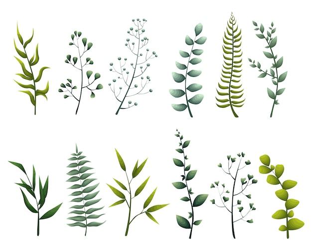 Набор сбора зеленых листьев трав в стиле акварели