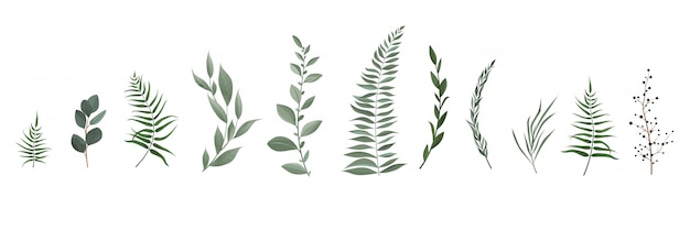 Set collection of green leaves herbs in watercolor style.