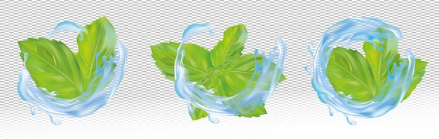 Set, collection of green mint leaves with blue water splash.