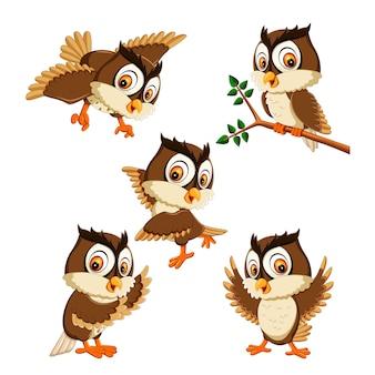 Set collection of  owl bird cartoon