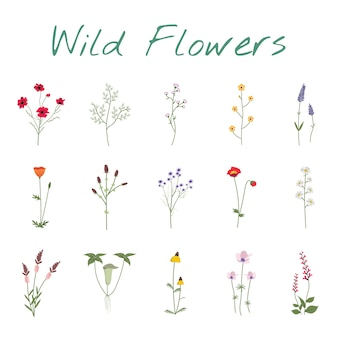 Set collection of wild flowers illustration