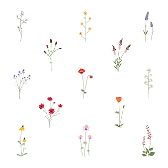 Set collection of wild flowers vector illustration