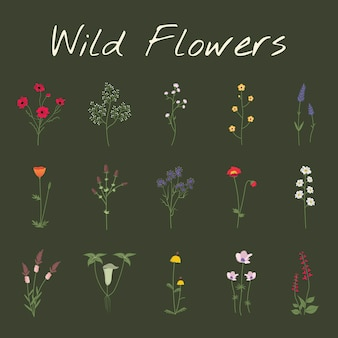 Set collection of wild flowers