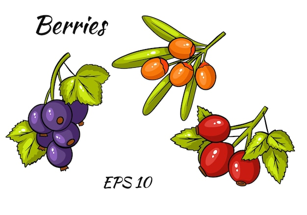 Set of colorful berries. twigs of red currant