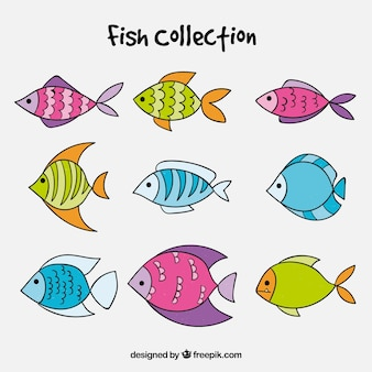 Set of colorful fish