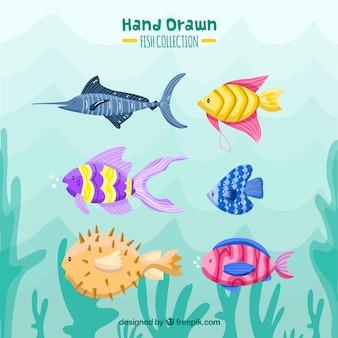 Set di pesci colorati in mano disegnato stile