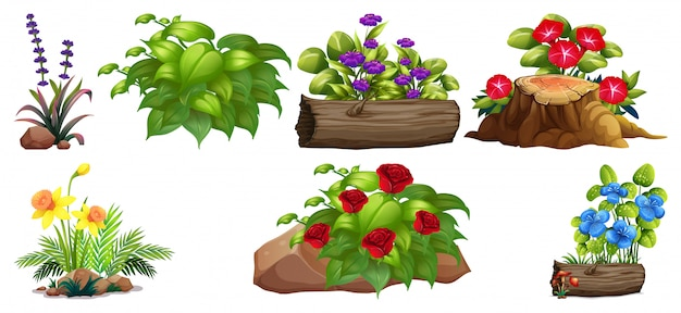 Set of colorful flowers on rocks and wood