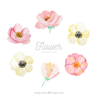 Set of colorful flowers in watecolor style