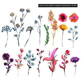 Set of colorful hand drawn botanical flower sketch
