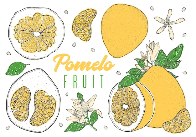 Set colorful hand drawn pomelo fruit.