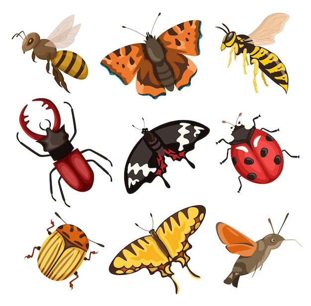 Set of colorful insects beetles butterflies bee wasp flying insects