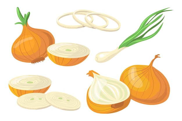 Set of colorful onions