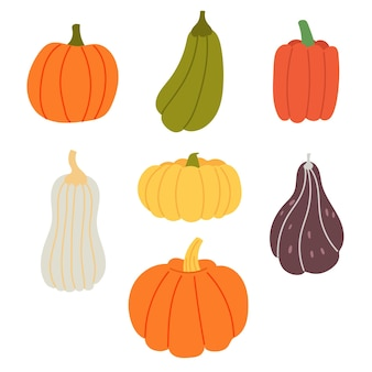 Set colorful pumpkins different shape. autumn harvest on halloween. vector hand draw clipart
