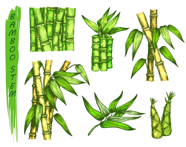 Set of colorful sketches of bamboo stalk. stems of asian plant. tropical grove hand drawn.