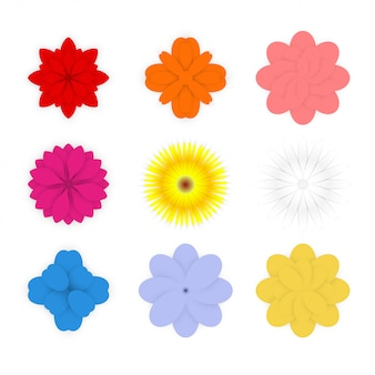Set of colorful spring flowers