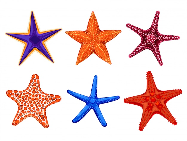 Set of colourful realistic starfishes