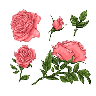 Set of coral roses. hand drawing
