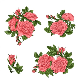 Set of coral roses