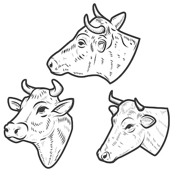 Set of cow heads on white