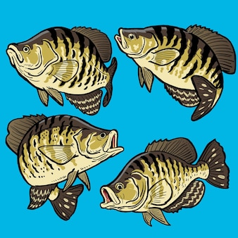 Set of crappie fish for gamefish collection