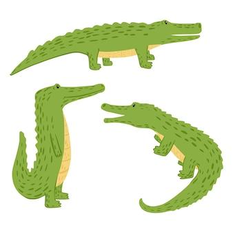 Set crocodiles on white background.