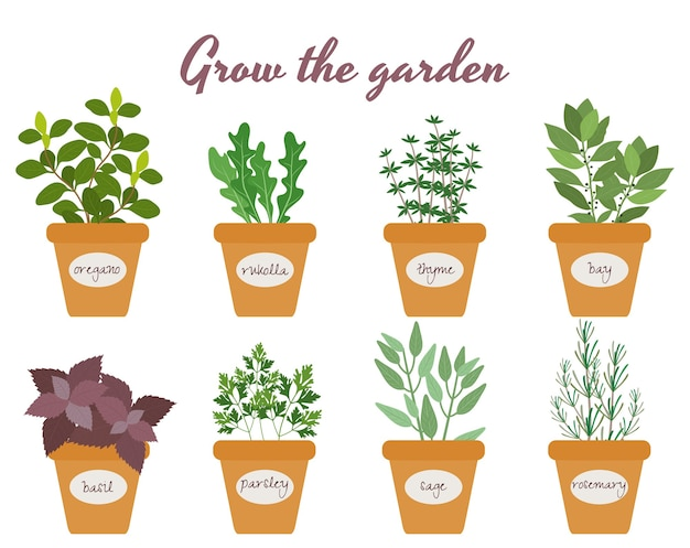 Set of culinary herbs in pots
