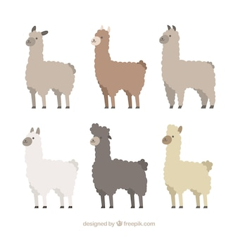 Set of cute alpacas