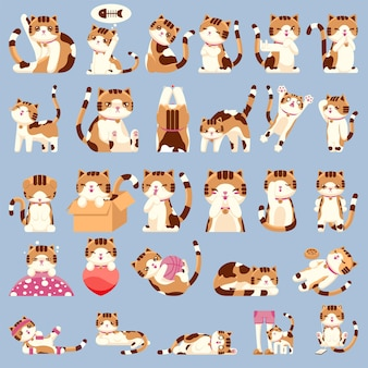 Set of cute calico cat character in various gestures icon