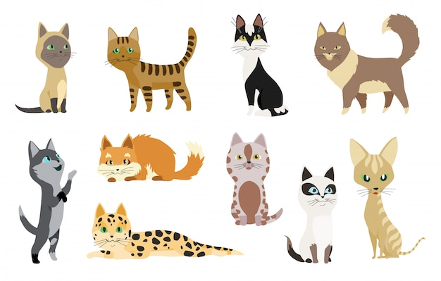 Set of cute cartoon kitties or cats with different colored fur and markings standing sitting
