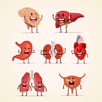 Set of cute character human internal organs