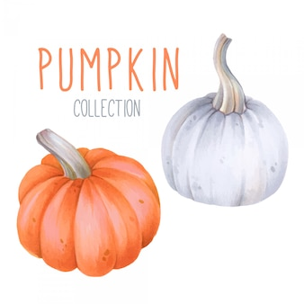 Set of cute halloween pumpkins isolated on white background