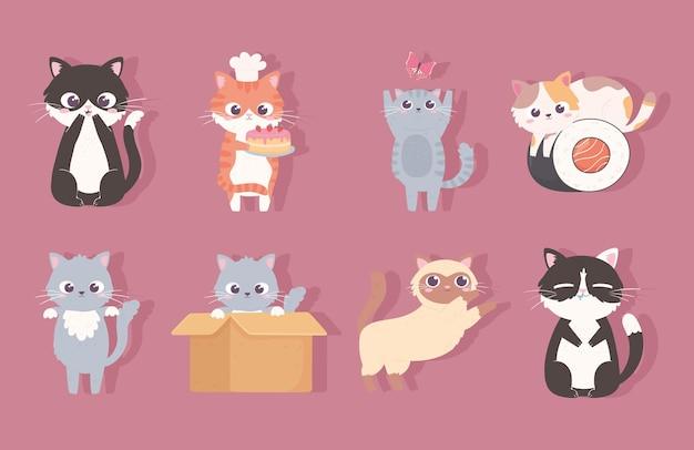 Set cute kitty