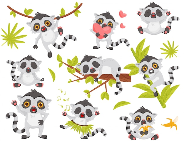 Set of cute lemur in different actions. exotic animal with long tail and big shiny eyes