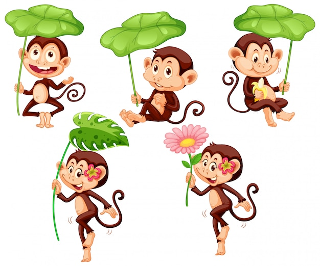Set of cute monkey with green leaf on white background