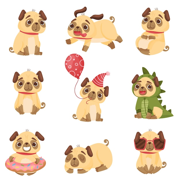 Set of cute pugs in different poses