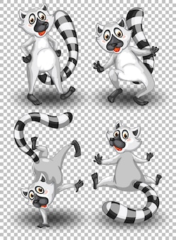 Set of cute raccoon on transparent background