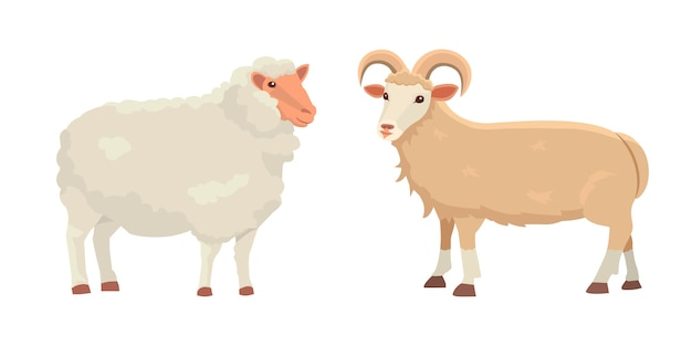 Set cute sheep and ram isolated retro illustration. standing sheeps silhouette on white. farm fanny milk young animals