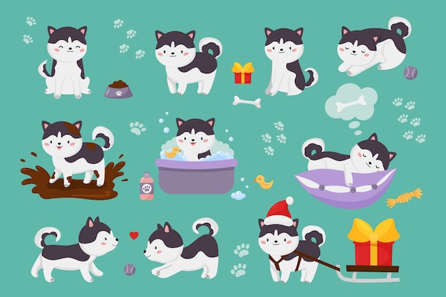 Set of cute siberian husky dogs. kawaii cartoon character puppy is jump in muddy puddle, washing, playing ball, sleeping on pillow.