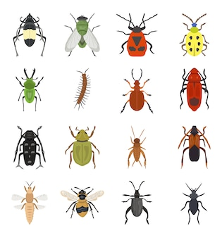 Set of dangerous beetles insects premium