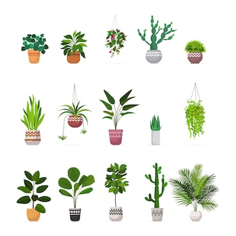Set decorative houseplants planted in ceramic pots different garden potted plants collection isolated