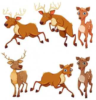 Set of deer and position