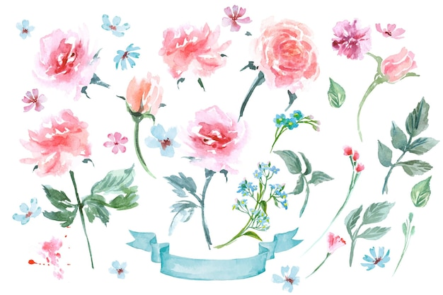 A set of delicate watercolor flowers, roses, forget-me-nots. watercolor vector illustration.
