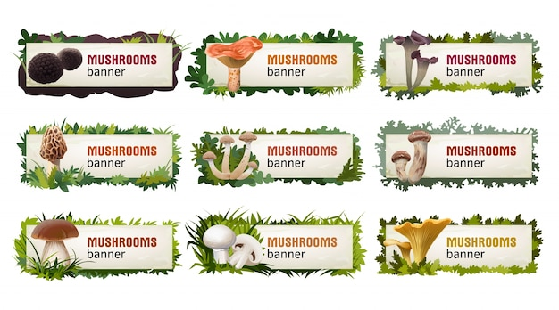 Set of delicious mushroom vector banners.