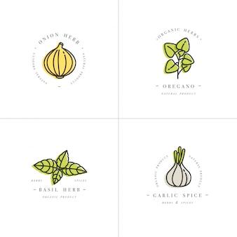 デザインのカラフルなテンプレートのロゴとエンブレム-ハーブとスパイスを設定します。イタリアのハーブのアイコン。白い背景に分離されたトレンディな直線的なスタイルのロゴ。