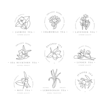 セットデザインのカラフルなテンプレートのロゴとエンブレム-オーガニックハーブと紅茶