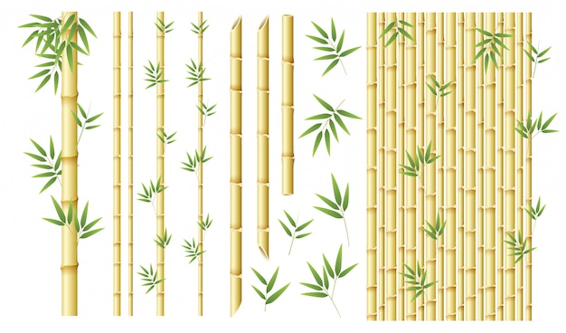 Set of different bamboo